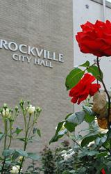 Roses at City Hall