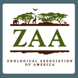 zaa rounded
